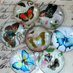CB252 - Glass cabochons with butterflies. 25mm. Pack of 5